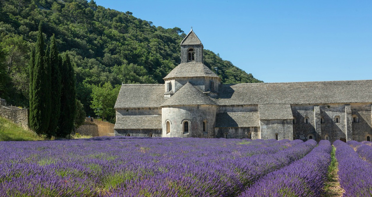 L'abbaye romane de Sénanque au milieu des champs de lavande (Ph.Giraud)